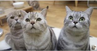 """""""Do You Want A Bath?""""….Cat Owner Knows What NOT To Say To His Cats!"""