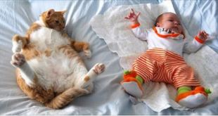 15 Pictures Proving Cats LOVE Kids!
