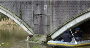 Cat Missing for 15 Months, Rescued From Being Trapped Under Bridge