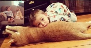 Cat That Was Cast Away By One, And Rescued By Another Finds His Best Friend In A Little Boy