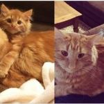 Ginger Cat Finds His Mini Me and Raises Him Like His Own