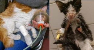 Iran Rescue Group Saved Two Cats From Their Death