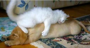 These 25 Cats Are Taking Naps To A Whole New Level. I Can't Handle The Cuteness.