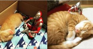 They Document Their Kitten's Growth with Help from Ultraman