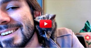 This Kitten Is The Cutest! Watch Her Give Her Owner Sweet Kitty Kisses