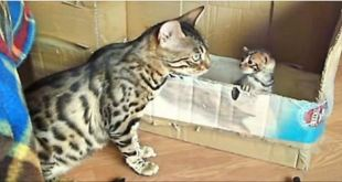 This Mama Has a Lot to Say to her Kitten