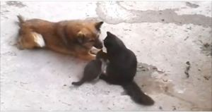 This Mom Cat Introduce Her Little Kitties To Her Old Buddy… This Is Really Amazing!