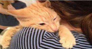 Woman Saves Kitten Despite Being Told He was too 'Feral'