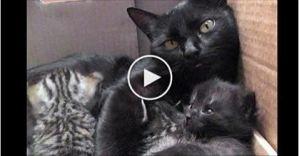 Sweetest Conversation Between Cat Mom and Her Kitties