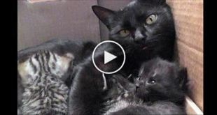 sweetest-conversation-between-mama-cat-and-her-babies