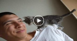 You Must See This Adorable and Annoying Kitty