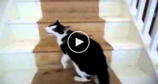 Watch What Happens When Cat Urgently Alerts Human That She Is Ready To Give Birth
