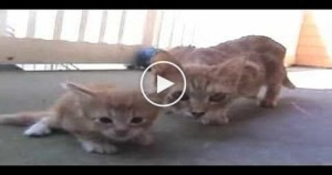 Cat Mom Comes to Rescue Her Tiny Baby. So Cute..