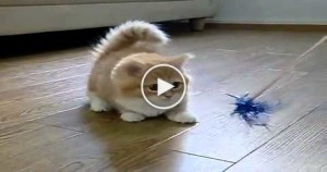 Watch This Cute Confused Kitten. So ADORABLE…