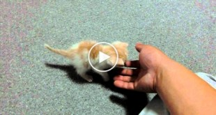 His Son Brought Home This LONELY Kitten.. Heartbreaking Story...