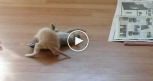 How To Stop a Kitten Fight ?