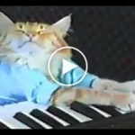 Have You Seen The Piano Mozart Cat ?