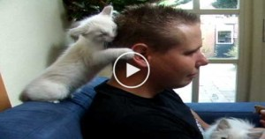 SENSITIVE Cute Kitty, Gives The Greatest Hugs To His Human… So LOVELY….