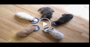 Watch These CUTE Kittens Enjoy LUNCH Time.. OMG…. Amazing