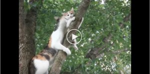 Mama Cat Noticed Her Kitty TRAPPED On Tree… What Happens Next Is Incredible….