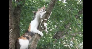 Mama Cat Noticed Her Kitty TRAPPED On Tree... What Happens Next Is Incredible....