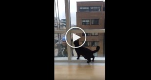 Curious Cat Makes Friends With Window Washer. Amazing Video...