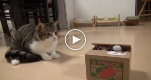 Watch This Cat`s HILARIOUS Reaction When She Discovered New Toy Box.