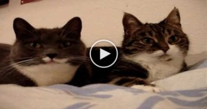 You Have To Hear These Two TALKING Cats. So Funny.