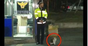 Stray Cat Comes To Police Officer Begging For Help… What Happens Next Is Unbelievable!
