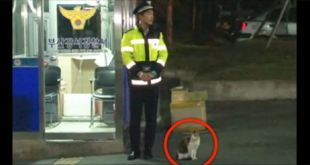 Stray Cat Comes To Police Officer Begging For Help... What Happens Next Is Unbelievable!