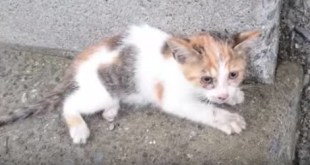 Kind Man Rescued a Tiny Kitty, After He Saw Him Falling From a Bridge
