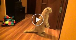 This Curious Cat Is Really Shocked. You Have To See..