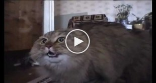 This Sweet Cat Talking Like a Real Human. You won`t believe your ears.