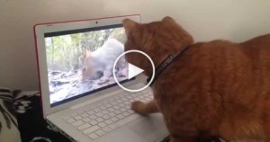 Curious Cat SHOCKED After Watching Squirrel On Video. HILARIOUS Reaction!