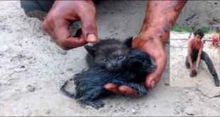 Young Man Rescued Kittens From Oil Spill