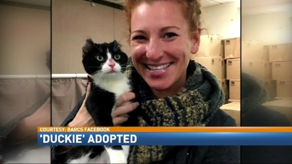 Kitty Found With Burned Ears Gets a New Forever Home