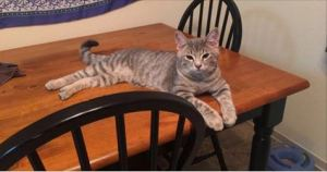 Kitten Entered Into Woman's Home Claiming This House Her New Home