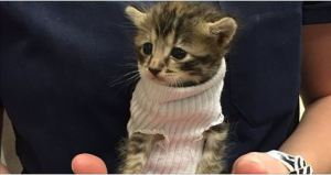 Kitten Saved From Hurricane Matthew Gets Tiny Jumper Made Out Of Sock