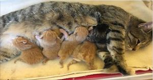 Tabby Cat Saved From Freezing Surprises Rescuers With 6 Wonderful Kittens