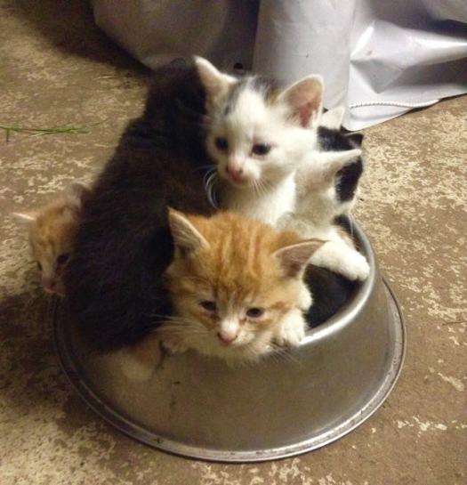 Big Kitty Chose A New Cat Mom