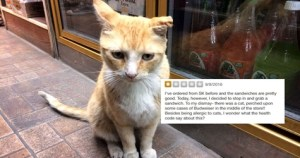 Woman Wrote Bad Review Because Of a Resident Bodega Cat, And Broken The Golden Bodega Rule