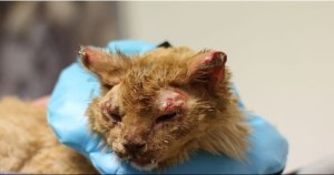 Amazing Cat Rescued From Home Explosion Luckily Survives