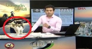 Stray Kitten Interrupted Live Morning TV Show In Turkey