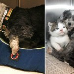 Stray Pup Saved Abandoned Tiny Kitty – Just Incredible Story