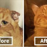 Couple Adopts ' Saddest Cat ' Waiting To Be Euthanized , Here's How Cat Transformed In Only One Hour