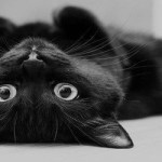 It's National Black Cat Day! Just Stop Hating On Black Cats! They Bring Only Good Luck.