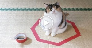 They Said Kitty Won`t Leave This Circle. Is That True? Watch The VIDEO To Find Out!