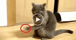 Cat Thought It Was Fun Playing With A Duct Tape, But Watch What Happens Next ..