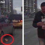 Lucky Tiny Kitten Escapes Certain Death