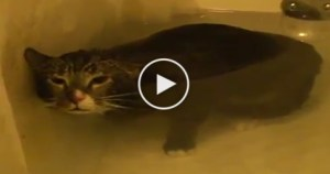 Cutest Cat Meowing Under Water. This Is The Most Hilarious Video. Must Watch
